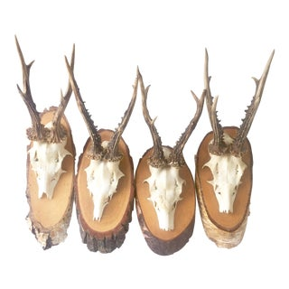 Mounted Roe Deer Antlers - Set of 4 For Sale