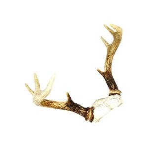 Vintage 8 Point Deer Antler Rack