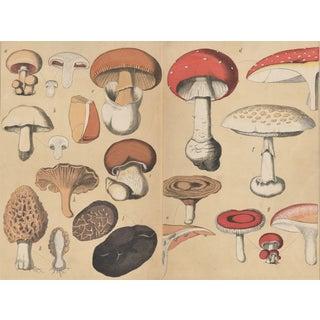 1860's French Mushroom Vegetable Botanical Chromolithographs, Set of 2 Matted For Sale