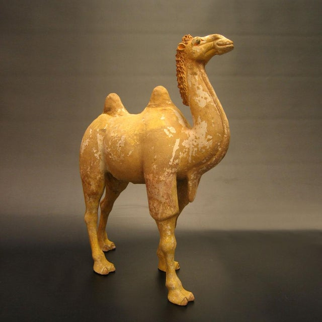 Asian Tang Dynasty Painted Pottery Walking Camel For Sale - Image 3 of 3
