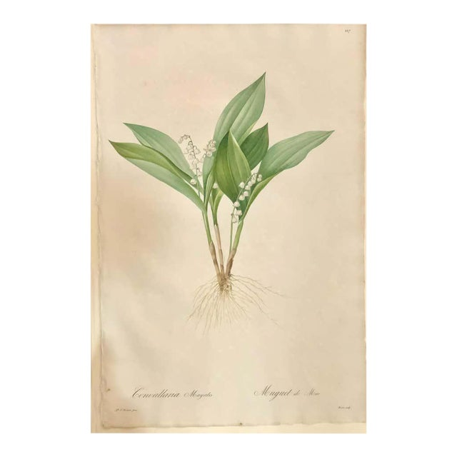 Convallaria Majalis Print Hand Colored Engraving Signed p.j. Redoute For Sale