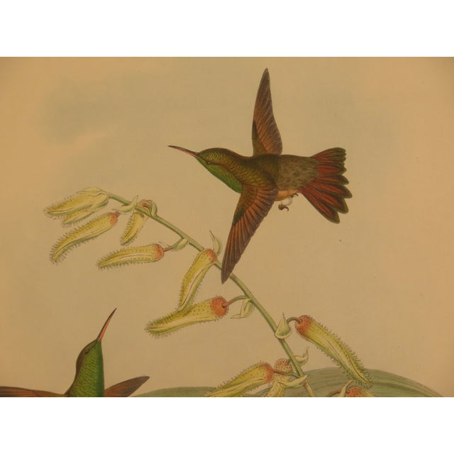 Gold Original John Gould Matted & Gold Framed Colored Etchings - a Pair For Sale - Image 8 of 13