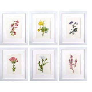 Antique English Botanical Prints by Hulme C.1900 - Set of 6 For Sale