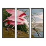 Image of Audubon's Roseate Spoonbill Triptych Framed in Black - Set of 3 For Sale