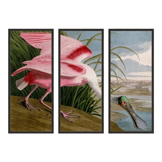 Audubon's Roseate Spoonbill Triptych Framed in Black - Set of 3 For Sale