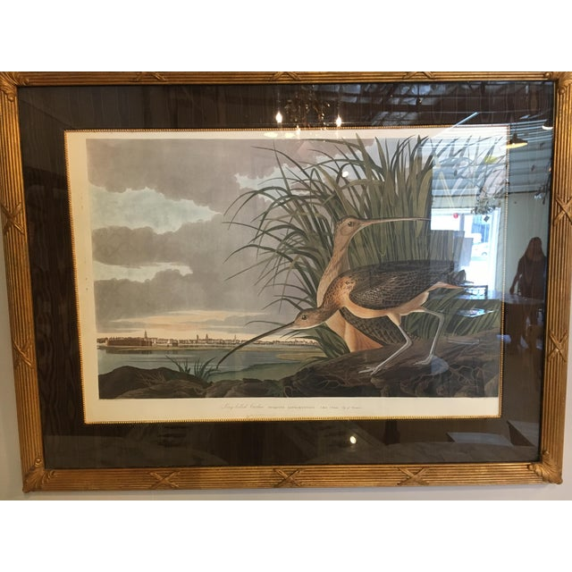 """Long-Billed Curlew""Bird Print For Sale In New York - Image 6 of 10"