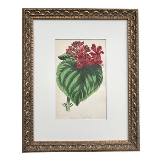 Antique Botanical Lithograph Published C. 1860 by S. Holden For Sale