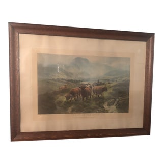 Scottish Cattle Framed Print For Sale