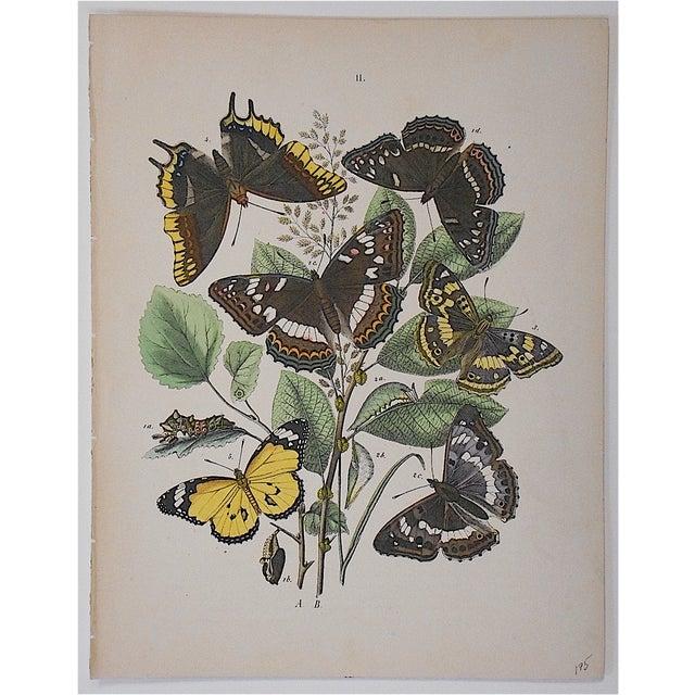 Antique Chromolithograph Butterflies/Moths - Image 2 of 3