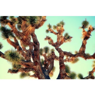 Contemporary 'Joshua Tree – Abstract' Photography by Kristin Hart, 40x60 For Sale