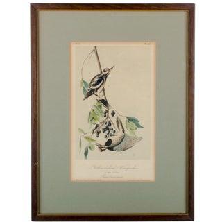 Audubon Yellow-Bellied Woodpecker Print For Sale