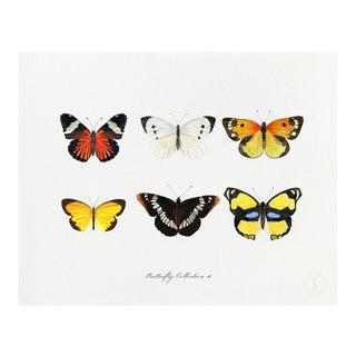 """Butterfly Collection II"" Giclée Art Print by Felix Doolittle - 16x20 For Sale"