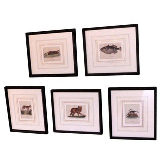 Original Hand Colored Copper Plate Etchings of Animals For Sale