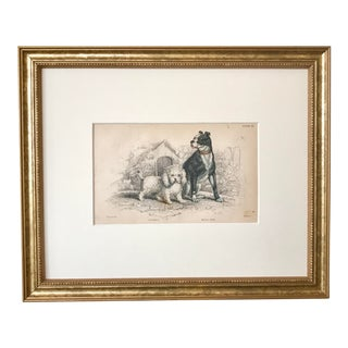 Antique Dog Print Engraving Poodle Bull Dog by Sir William Jardine London 1854 For Sale