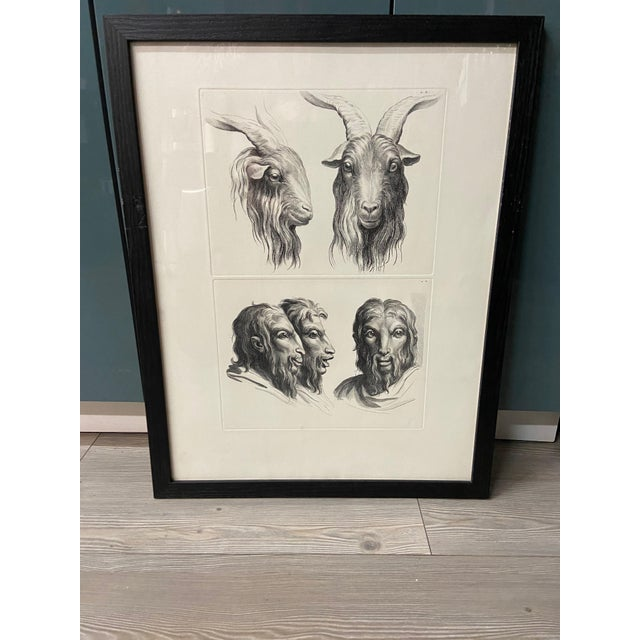 Man as Mountain Goat - Physiognomic Heads Series Framed Illustration by Charles Le Brun For Sale - Image 11 of 11
