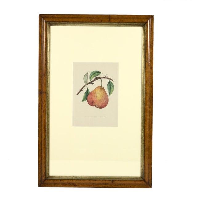 Original Hand-Colored Lithograph: Commission Royale De Pomologie. Annales De Pomologie. Brussels: F. Parent, 1853-1860. (3) For Sale In San Francisco - Image 6 of 6