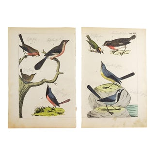 Hand Colored Song Birds Woodcut Prints - a Pair