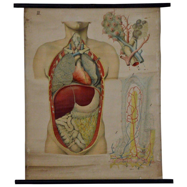 A great antique anatomical chart depicting the thoracic region and abdominal organs. the chart is sheet number III as part...