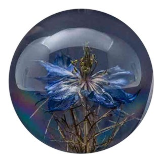 Natural Nigella Flower Paperweight For Sale