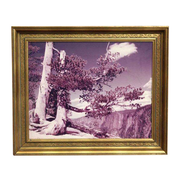 Framed Purple Hued Scenic Photo For Sale
