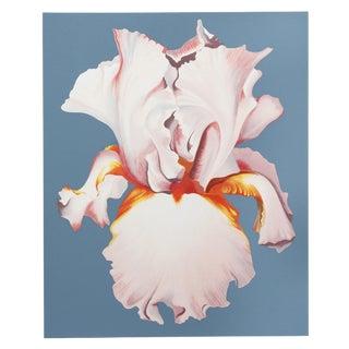 "Lowell Nesbitt, "" White Iris on Blue Ii"", Photorealist Flower Screenprint For Sale"