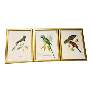 1940s Vintage Colorful Decorative Bird Illustrations- Set of 3 For Sale