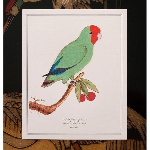 2010s 1590s Parrot Set of 3 by Anselmus De Boodt For Sale - Image 5 of 10