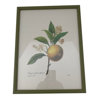 Reproduction Antique Botanical Lemon Print Framed For Sale