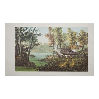 1960s Cottage Style Lithograph of a Yellow Shank by John James Audubon