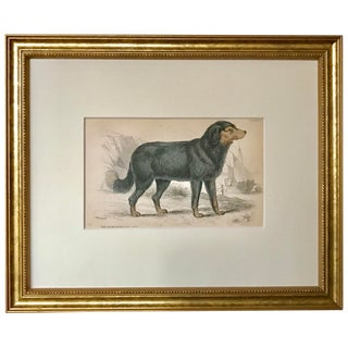 Antique Dog Print of a Newfoundland by Sir William Jardine London 1854 For Sale