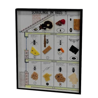 A Great Vintage School Teaching Display Of Household Pests (1) For Sale