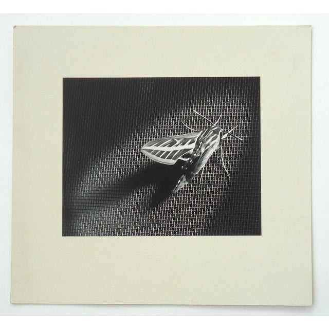 """""""Locust on Screen Door"""" by Dean W Hand, 1958. Original vintage photo mounted on mat board. A beautiful and sensitive work...."""