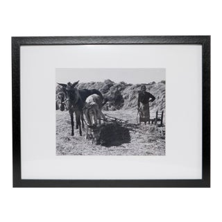 1960s Black and White Framed Photo of Burros