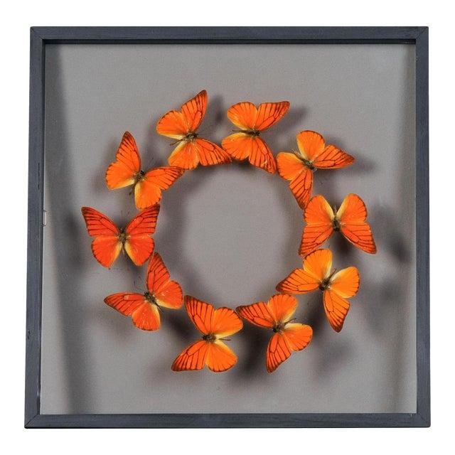 Vintage Sarreid Ltd Butterflies Collection - Image 1 of 2