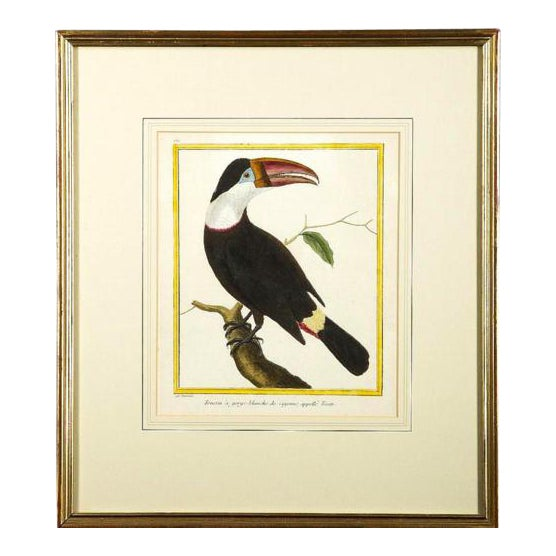 """Toucan"" Copper Plate Engraving - Image 1 of 7"