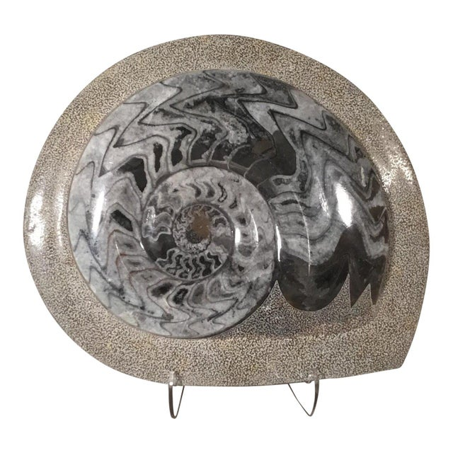 Fossilized Ammonite For Sale - Image 4 of 4