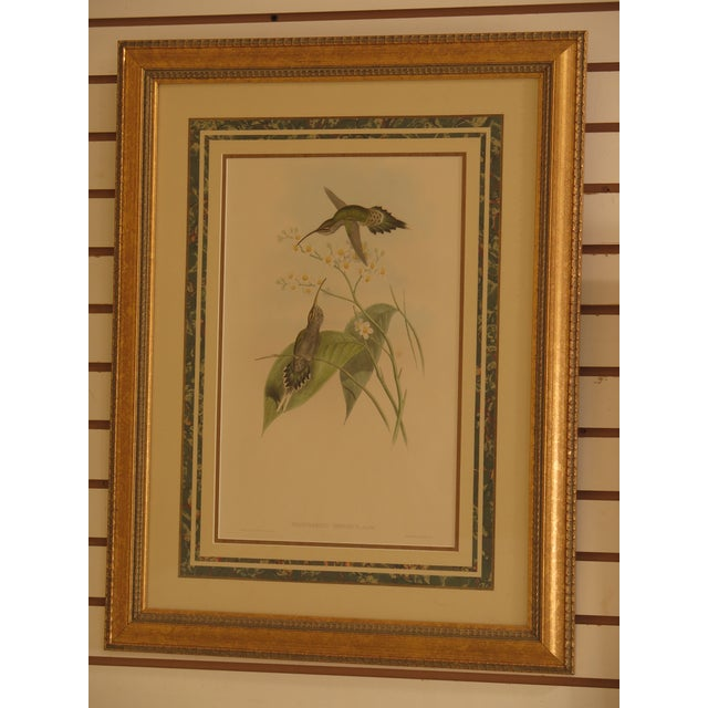 Original John Gould Matted & Gold Framed Colored Etchings - a Pair For Sale - Image 11 of 13