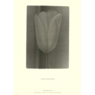 "Sheila Metzner Flower 28.25"" X 20"" Poster 1978 Minimalism Gray Tulip, Smoky For Sale"