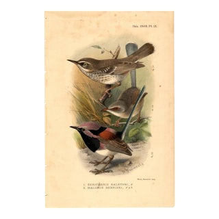 """1. Sericornis Balstoni; 2. Malurus Bernieri"", Limited Edition Bird Lithograph With Original Hand-Coloring and Pencil Signature by H. Gronvold 1909 For Sale"
