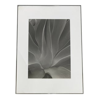 """James Danis """"Agave"""" Black and White Photograph C.1983 / 1990 For Sale"""