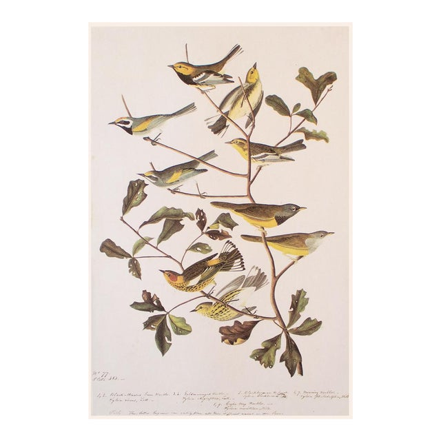 American Warblers by John James Audubon, Vintage Cottage Style Print For Sale