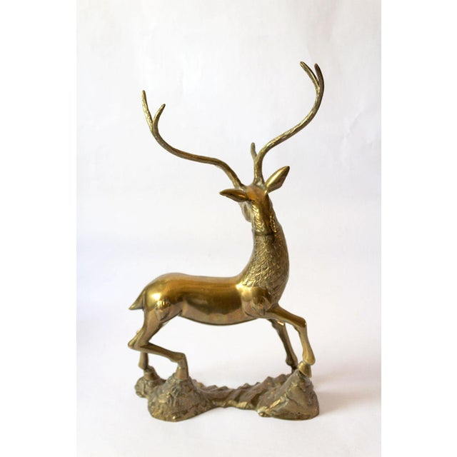 Luminous solid brass stag sculpture. An excellent center piece for dining settings, mantles, coffee tables; anywhere you...
