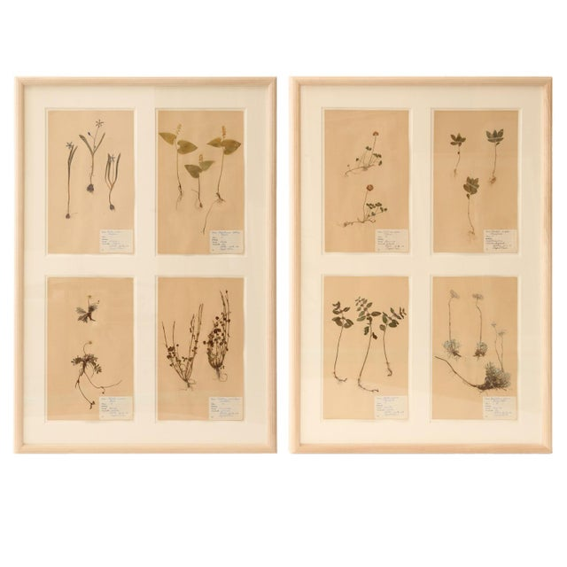 Framed Set of Four Herbaria For Sale - Image 13 of 13