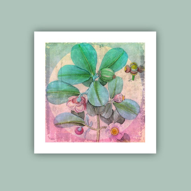 Contemporary Botanical Archival Print For Sale - Image 3 of 3