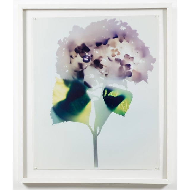 "Abstract ""Hydrangea"" Photogram by Millie Falcaro For Sale - Image 3 of 3"