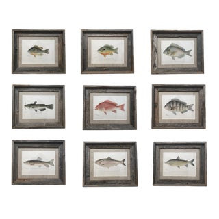 "Denton Fish Prints 1895 From ""Game Birds and Fishes of North America"" Framed in Reclaimed Barn Wood - Set of 9 For Sale"