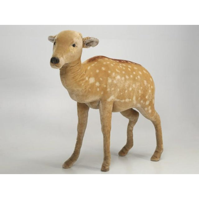 """1960s 1963 Steiff Mohair Fallow Deer """"Studio Animal"""" For Sale - Image 5 of 13"""
