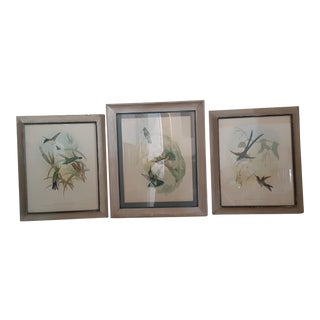 Early 20th Century Antique Gould Bird Lithographs - Set of 3 For Sale