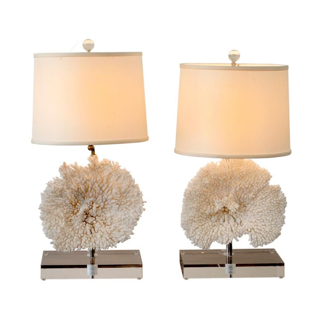 Distinguished pair of coral table lamps on lucite base decaso pair of coral table lamps on lucite base for sale image 11 of 11 aloadofball Images