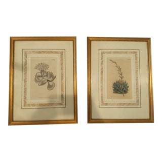 19th Century Antique Botanical Paintings - A Pair For Sale